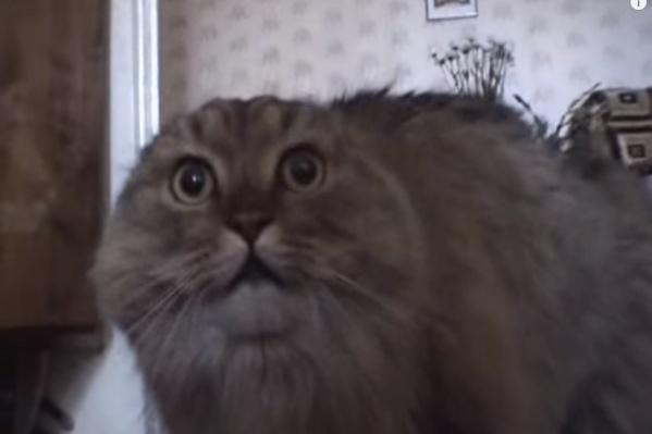 Кот Маркиз больше известен какNONONONO Cat