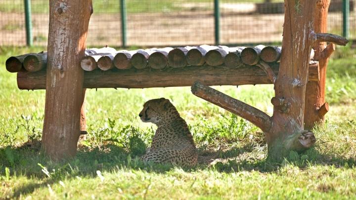 Ярославский зоопарк планируют увеличить в десять раз