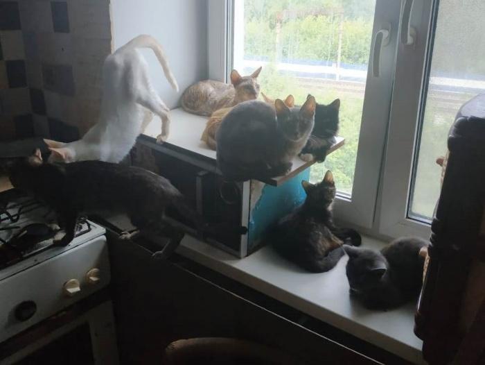 В квартире обнаружили десять кошек. И еще пятнадцать собак, но они на фото не попали