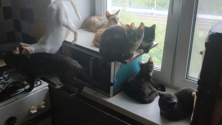 Приставы под видом сантехников проникли в квартиру, где екатеринбурженка прятала 15 собак и 10 кошек