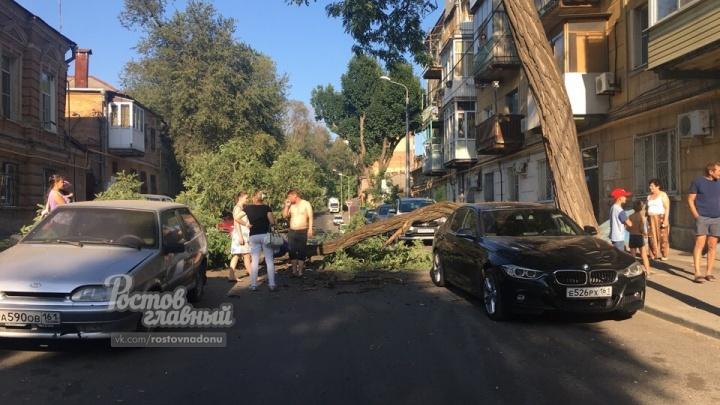 В центе Ростова ветка упала на три автомобиля