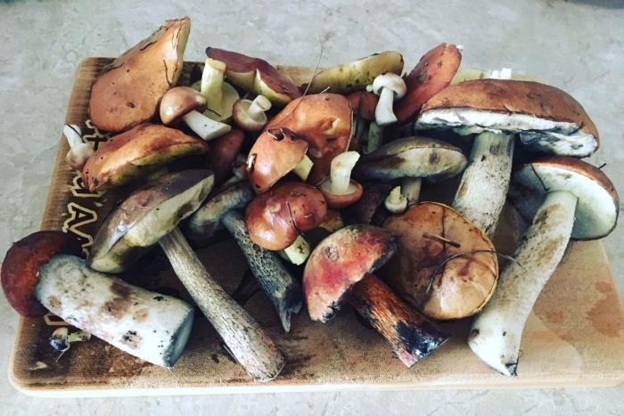 Эти грибы наша читательница собрала в районе Краснообска