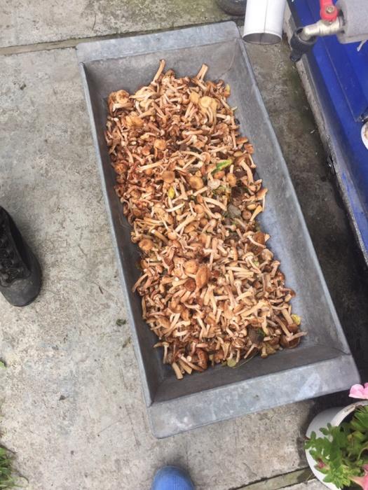 Тонны грибов: читатели E1.RU хвастаются собранным в выходные урожаем