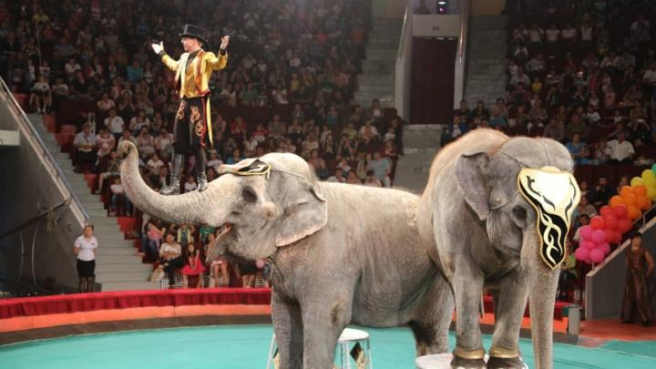 В Госдуме порекомендовали Голубеву запретить цирк с животными