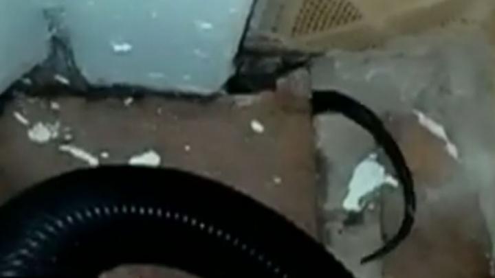 В Ярославской области семье, чей аварийный дом атаковали змеи, власти посоветовали разводить ежей
