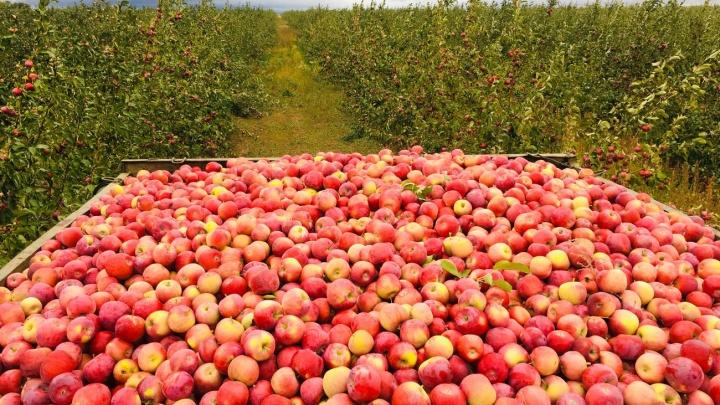 «Сады Придонья» вкладывают серьезные инвестиции в развитие сельского хозяйства