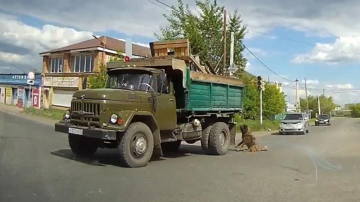 В Омске из кузова грузовика выпала собака и повисла на поводке
