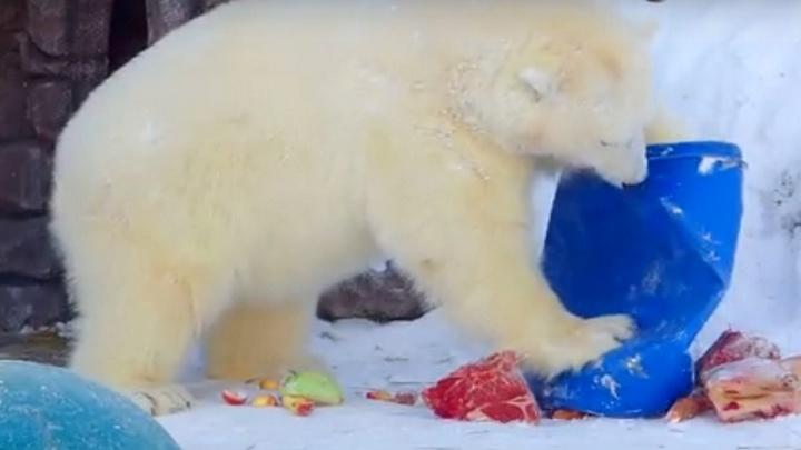 Белым медведям «Роева ручья» подарили игрушки и мешок мяса