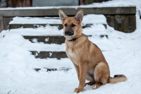 По словам зоозащитников, собаки и кошки без статуса находятся только в Северодвинске