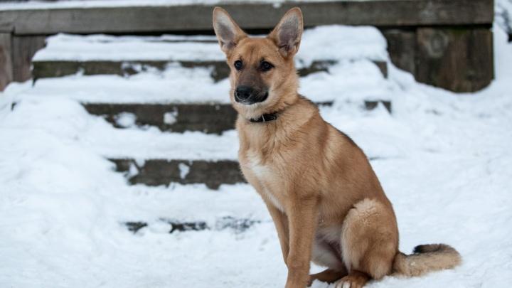 Северодвинские собаки и кошки всё-таки получат статус безнадзорных домашних животных