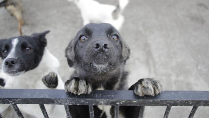 Новый руководитель «концлагеря для собак» решил сделать городской приют