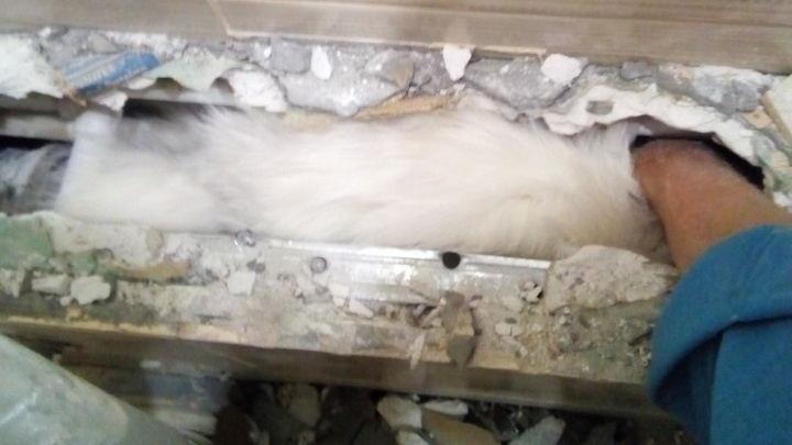 В Екатеринбурге спасли кота, застрявшего в коробе из гипсокартона