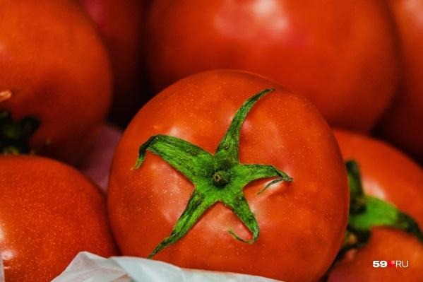 Первый урожай чусовских томатов планируют собрать в 2020 году