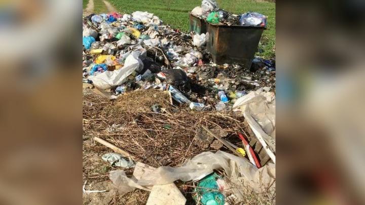 «Ужасный мусорный запах»: в Ярославской области из-за заваленных помоек произошла новая катастрофа
