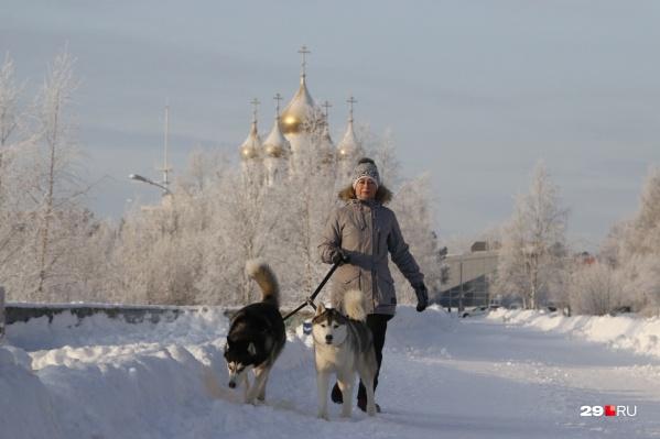 Главное, одеться тепло — тогда по плечу и долгие прогулки с собаками