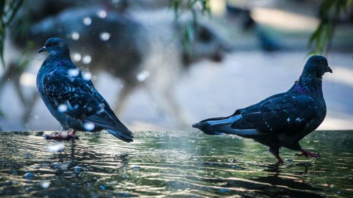 Вода — единственное спасение: фотограф снял утомленный аномальной жарой Волгоград