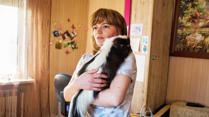 Запахло любовью: репортаж из дома сибиряков, где у пары скунсов появилось потомство