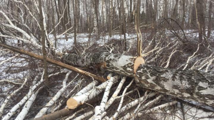 «Должны были строить»: в Башкирии предприятие незаконно вырубило лес на 700 тысяч рублей