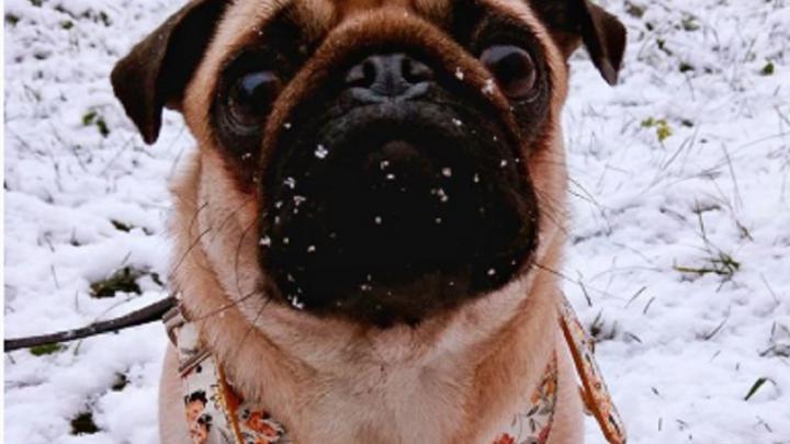 Вот и наступила зима. Встречаем первый снег вместе с фотографиями тюменцев из соцсетей