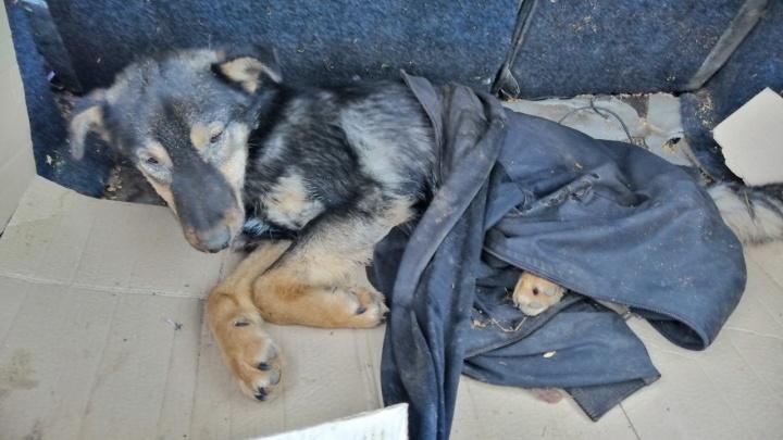 Жителя Ростовской области наказали за избиение щенка