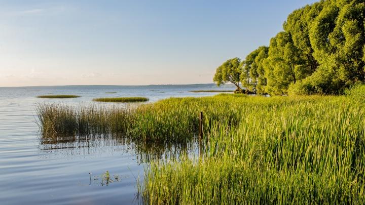 В Ярославской области из пруда достали тело молодого мужчины