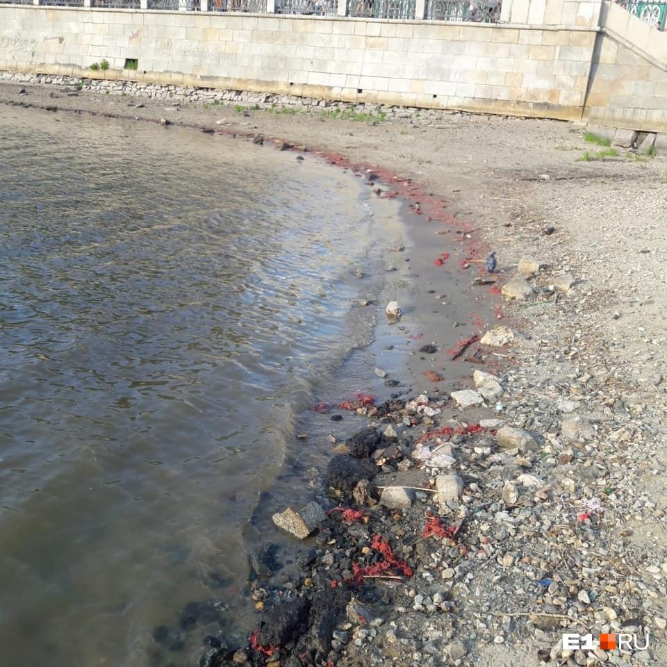 Берег Городского пруда покрылся ошметками красной краски: рассказываем, откуда она взялась