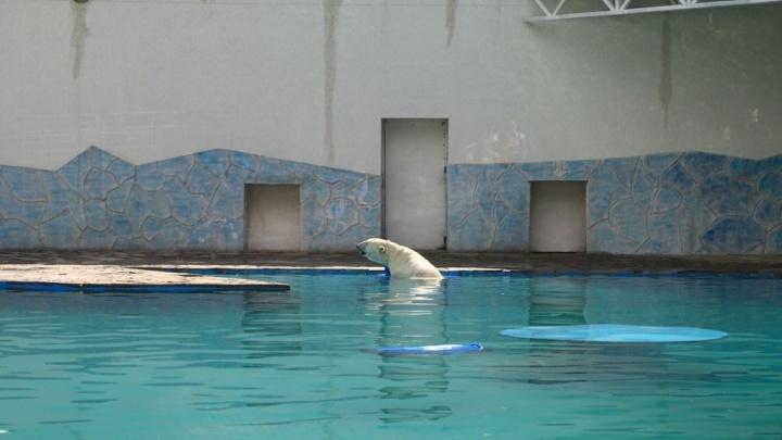 В ростовском зоопарке завершилась реконструкция вольера для белых медведей