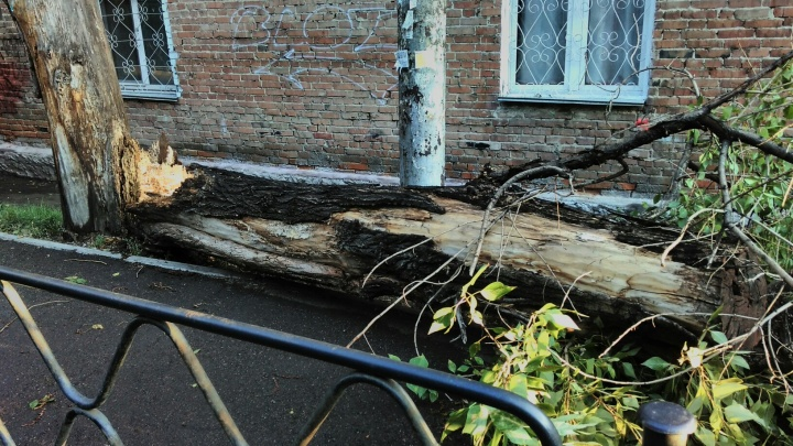 Ураганный ветер снес дерево на Толстого и оставил десятки домов без света