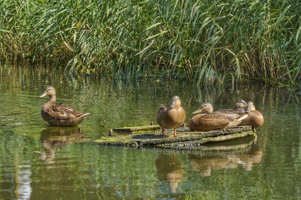 Загрязнение реки может уничтожить экосистему водоема, уверены специалисты