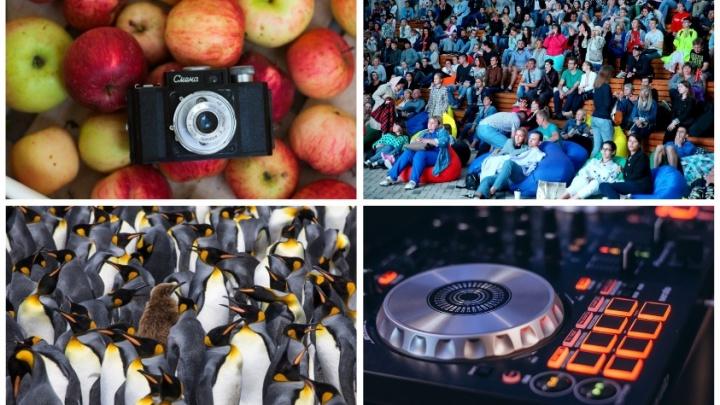 Пять вечеров: летний кинотеатр, фотовыставки и быт 21-го века