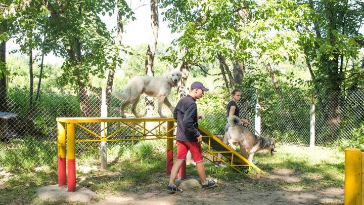 «Из центра гоняйте с собакой в Брагино»: мэр Ярославля утвердил места выгула животных