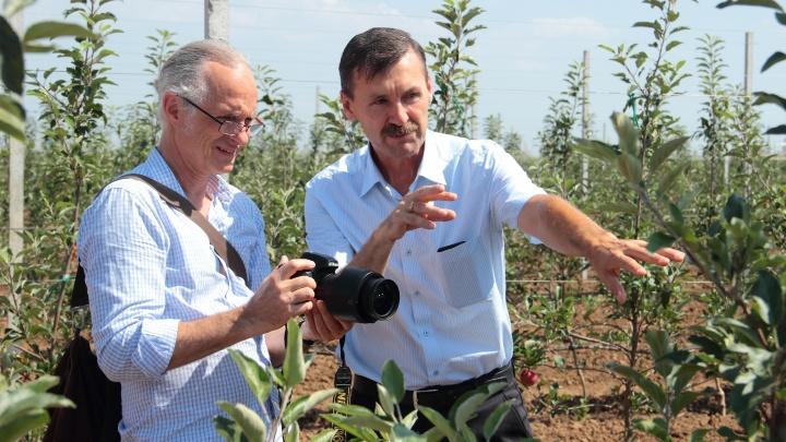 Журналисты из Германии и ОАЭ увезли с собой яблоки из «Садов Придонья»