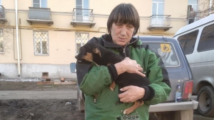 Екатеринбуржцы четыре часа доставали из колодца в Каменске-Уральском щенка, выброшенного хозяином