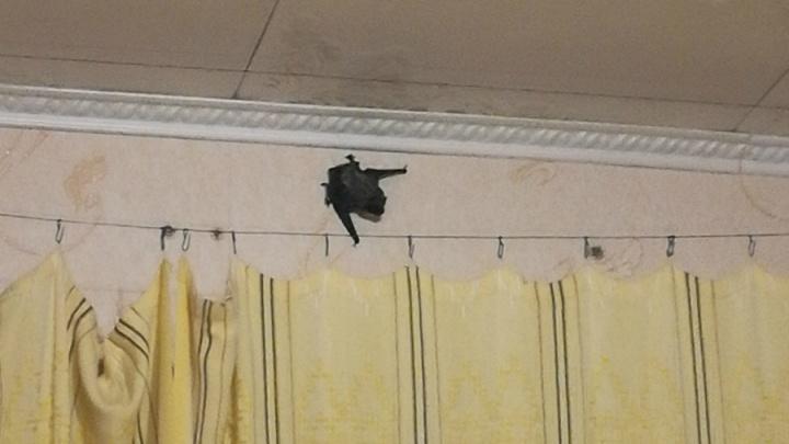 Бэтмен возвращается: сон уфимцев нарушили летучие мыши