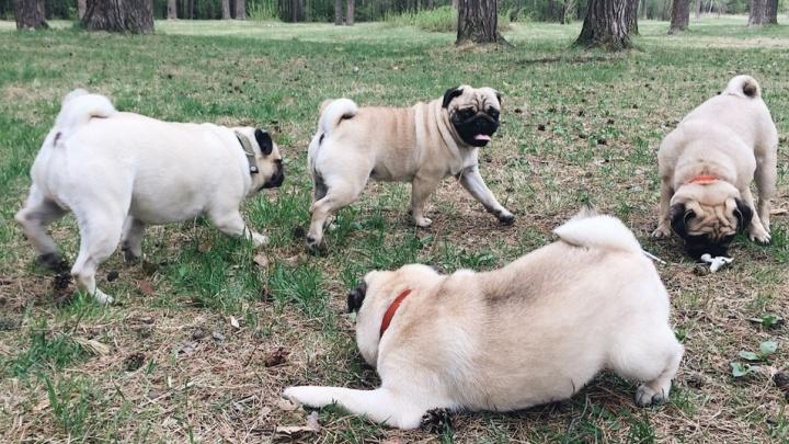 Жители Свердловского района обустроят площадку для выгула собак
