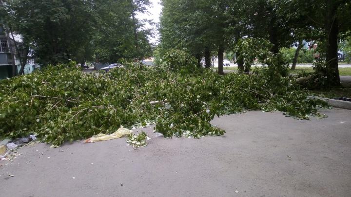 В Челябинске пенсионерку убило деревом, упавшим после порыва ветра