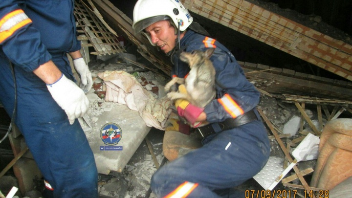 Из-под завалов дома на Сеченова спасли собаку