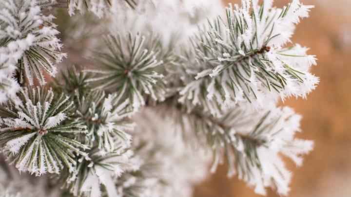 Вероятность остаться без снега невелика: глава Гидрометцентра рассказал о погоде на Новый год