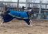 Инструкция E1.RU: зачем собаке комбинезон, а сфинксу — легкая кофточка