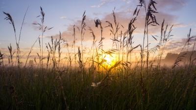 Роса и паутина: подборка чарующих рассветных снимков прошедшего лета