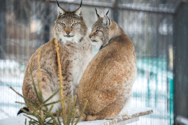 В зоопарке ожидают наплыва гостей