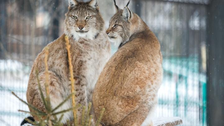 Зоопарк до конца года втрое снизил цену на билеты