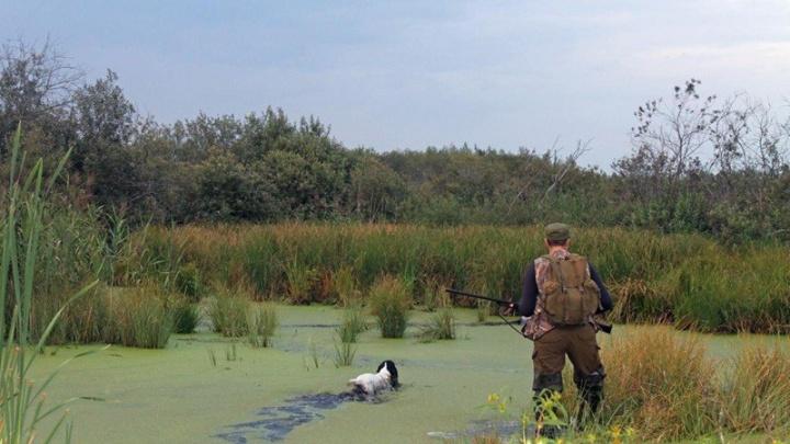 В Ярославской области разрешили стрелять в птиц: какие виды можно убивать