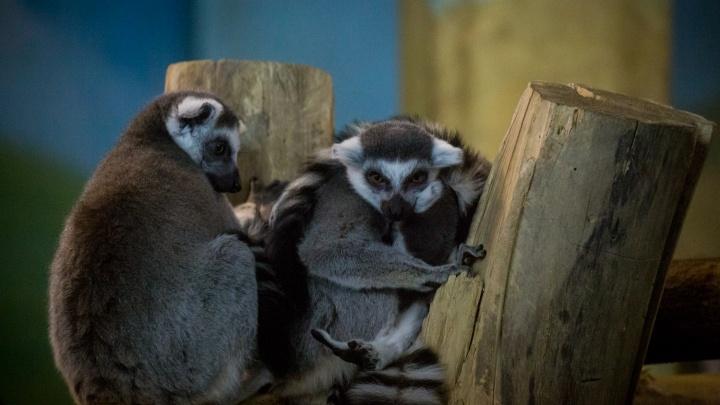 Новосибирский зоопарк сократил работу на час