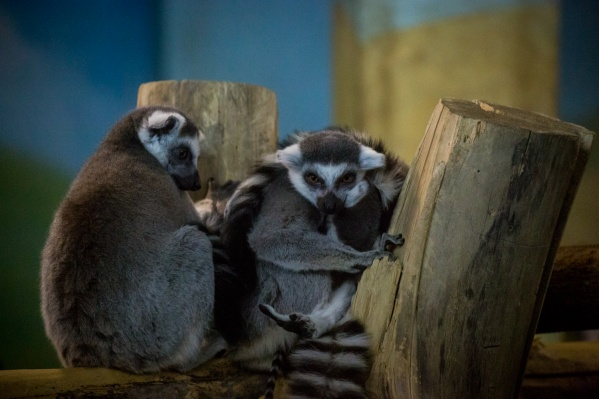 С сегодняшнего дня зоопарк перестал работать до позднего вечера: он будет закрываться уже в 21:00