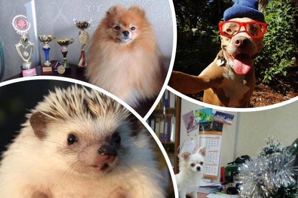 Показываем самые интересные объявления с сайта знакомств для животных