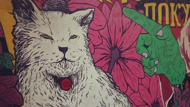 Художник из Омска потратил 30 литров краски на 25-метровый рисунок с котом и маками