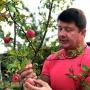 «Яблочки для вкусного компота»: мэр Ярославля похвастался своим дачным урожаем
