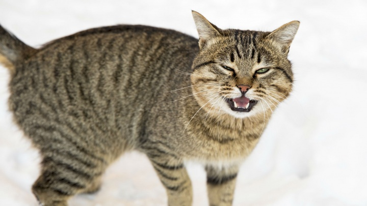 Убили из-за кошки: подробности расправы над мужчиной в Ярославском районе