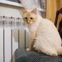 В Ярославской области отопление отключат по желанию жителей